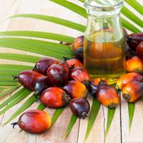 Aceite de palma y ecología